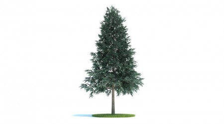 tree : Picea abies v2