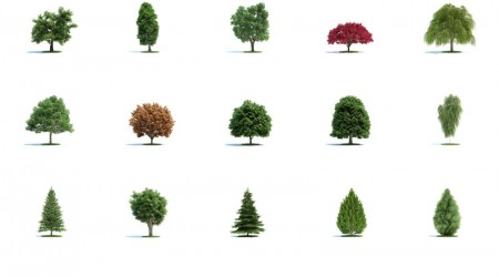 pack 3d trees vol 1