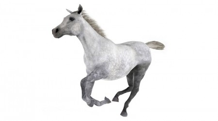 grey horse galloping