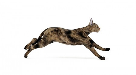 European cat running
