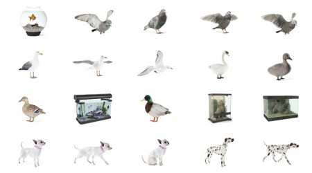 pack animaux 3d vol 1