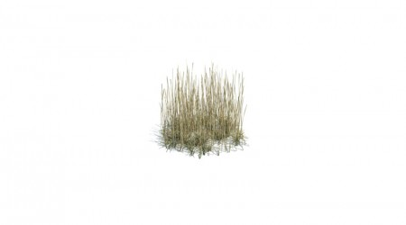 Area of tall grass