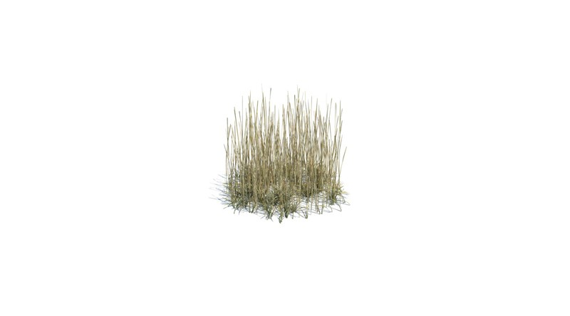 Area of tall grass 3d library 3d models trees plants for Tall ornamental grasses for shaded areas